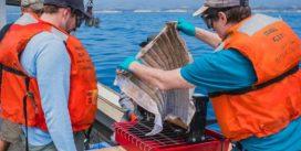 Oleo Sponge – губка-фильтр, которая поможет очистить океан от остатков нефти и нефтепродуктов