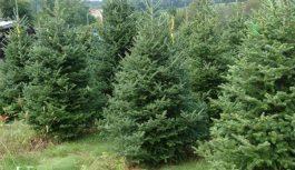 Подчиненные Кернеса в апреле купили елок по четверти миллиона за штуку