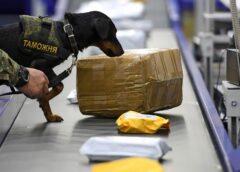 Гроза преступников: в Госпогранслужбе рассказали, сколько за год собаки нашли наркотиков и оружия